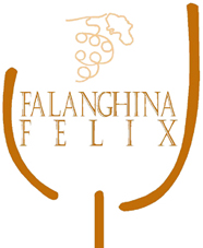 uploaded/Images/falanghinaFelixPiccolo-rit.jpg